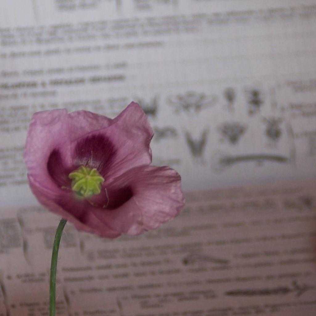Botanique & Plantes bio-indicatrices : nouvelle formule