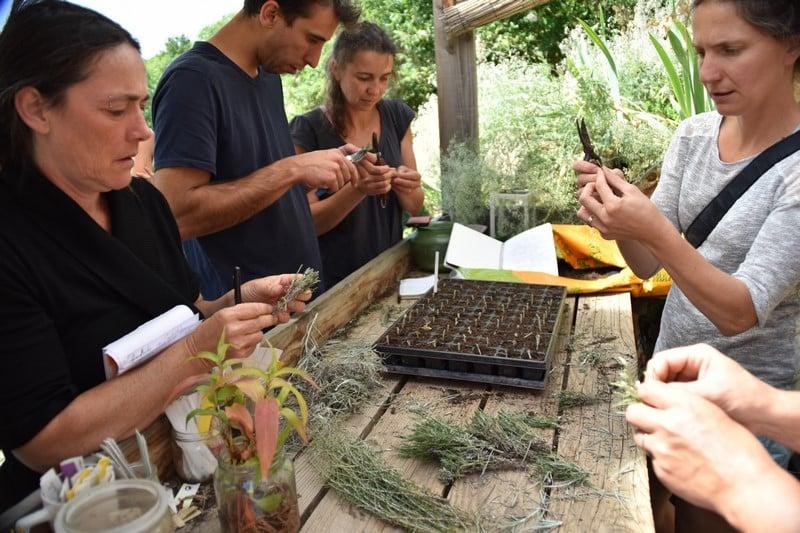 Stages de permaculture et de formation aux plantes médicinales